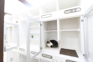 写真:猫用ホテル